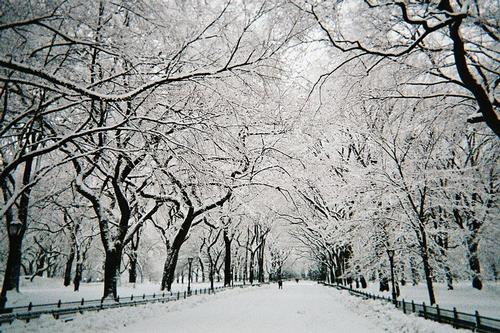 Central park in New York in de sneeuw Foto:Ekabhishek